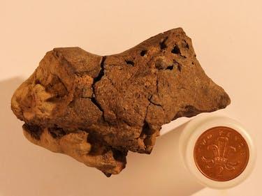Holy Shit, We Found a Dinosaur Brain