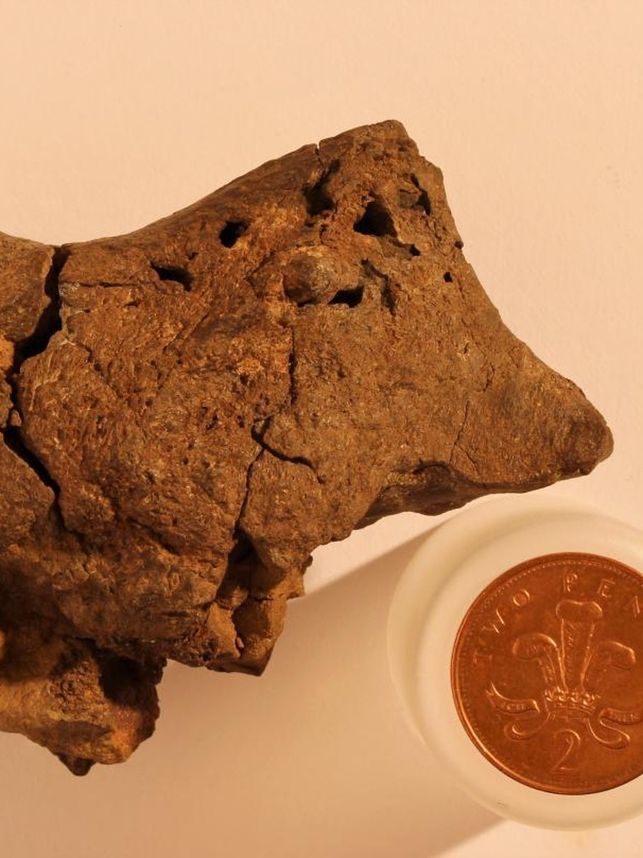 Fossilized dinosaur brain tissue identified for the first time