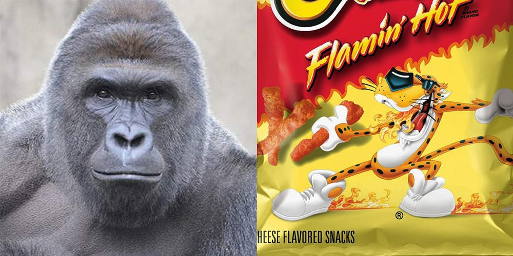 People are bidding more than $100,000 on Ebay for a Cheeto that looks like Harambe