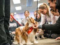 Therapy dogs CEP library 2018-6