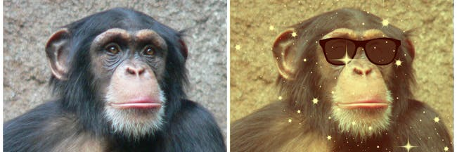 A new chimp study shows that the lowest-ranking members of society wield a surprising amount of influence on their peers.