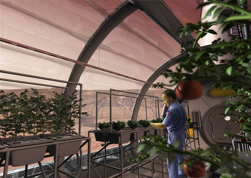 Solar Energy-Powered Hydroponics Could Feed Mars Colonies, Elon Musk Says