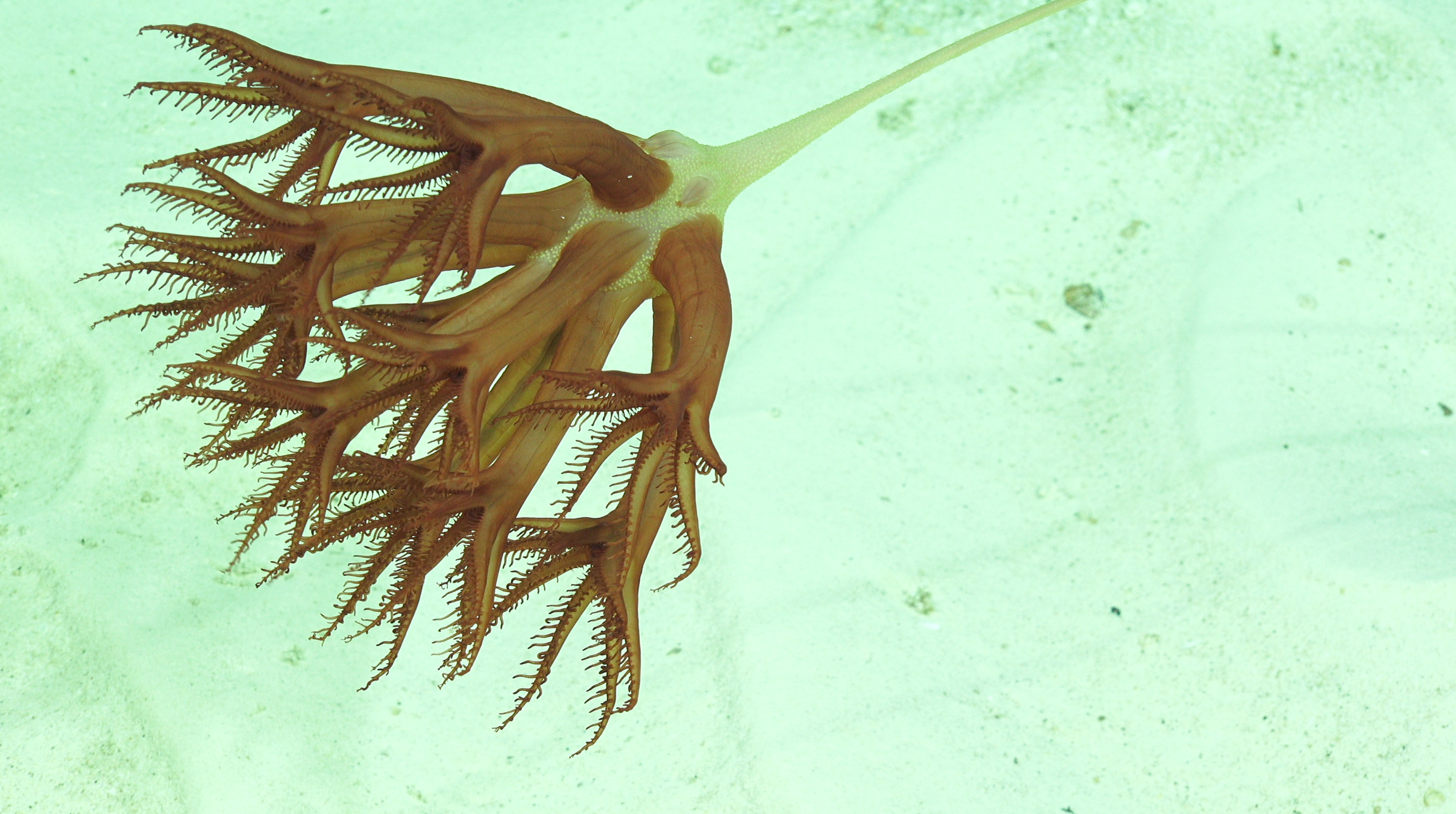 A sea pen, or possibly your new screensaver.