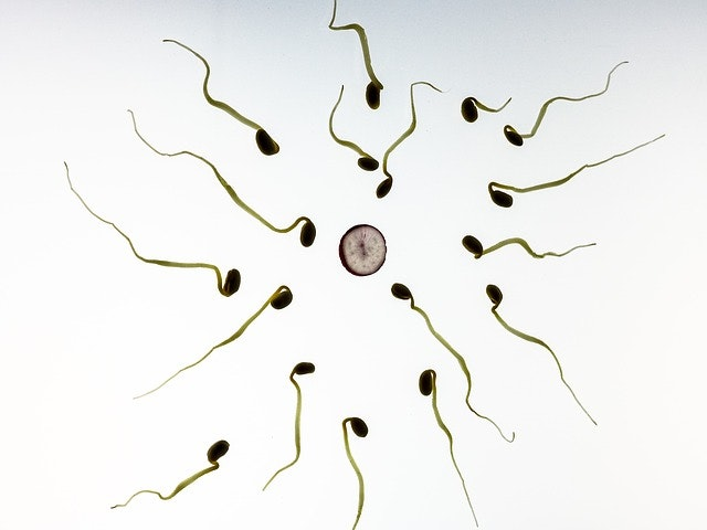 Body mass and sperm count