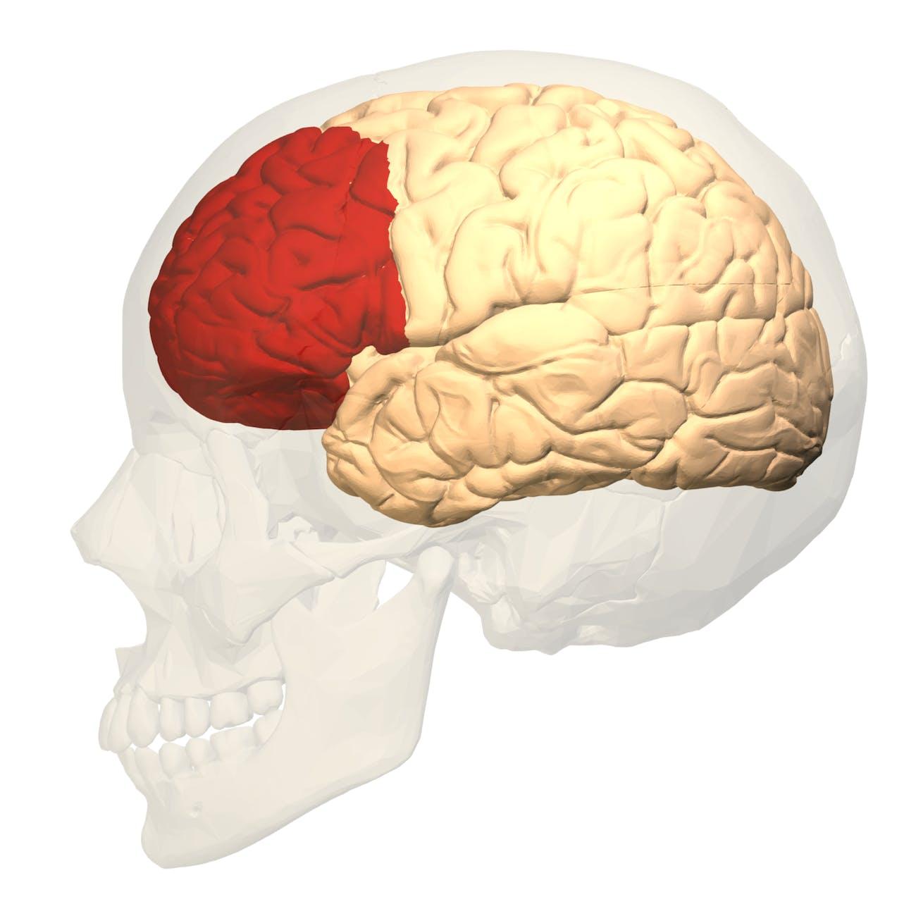 reward system brain