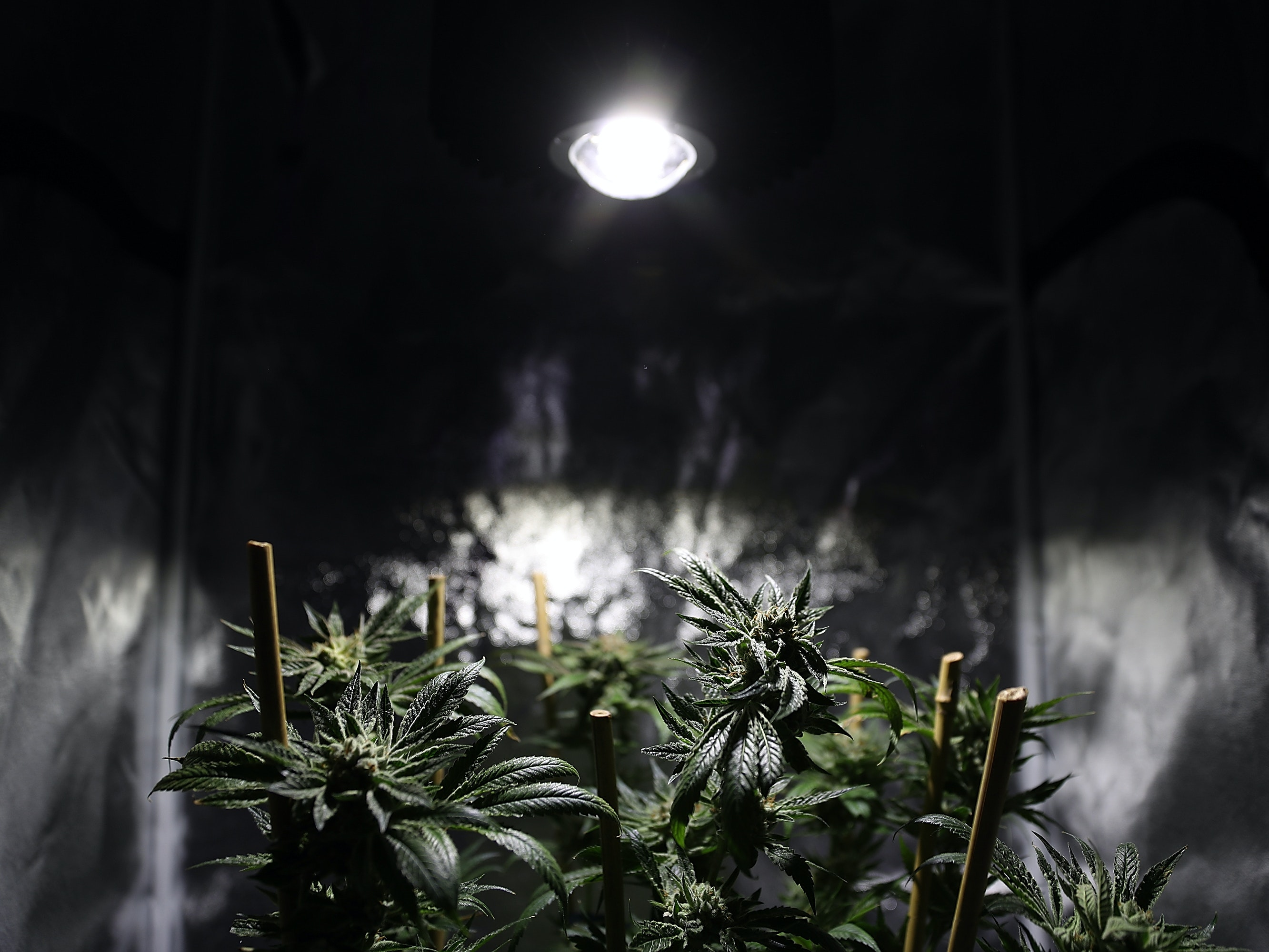 The DEA's decision not to overturn the research laws on marijuana, a Schedule 1 drug, means scientists will continue to have to sort through years of paperwork before beginning their research.