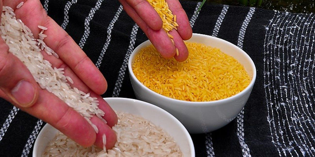 GMOs, rice