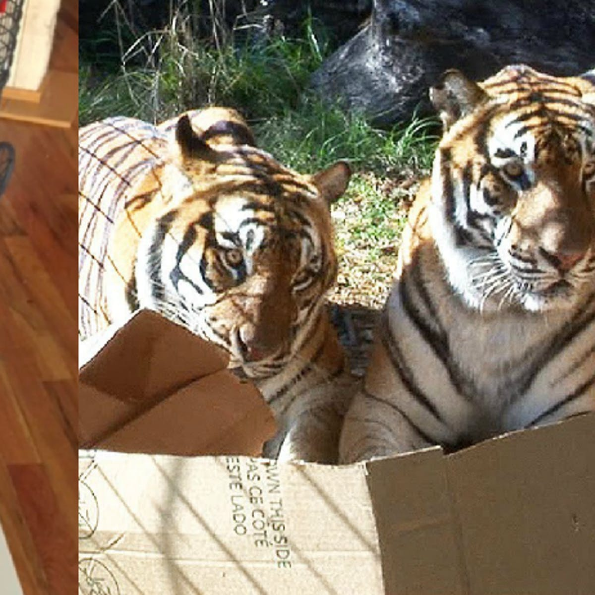 Why Cats Love Boxes, According to Science