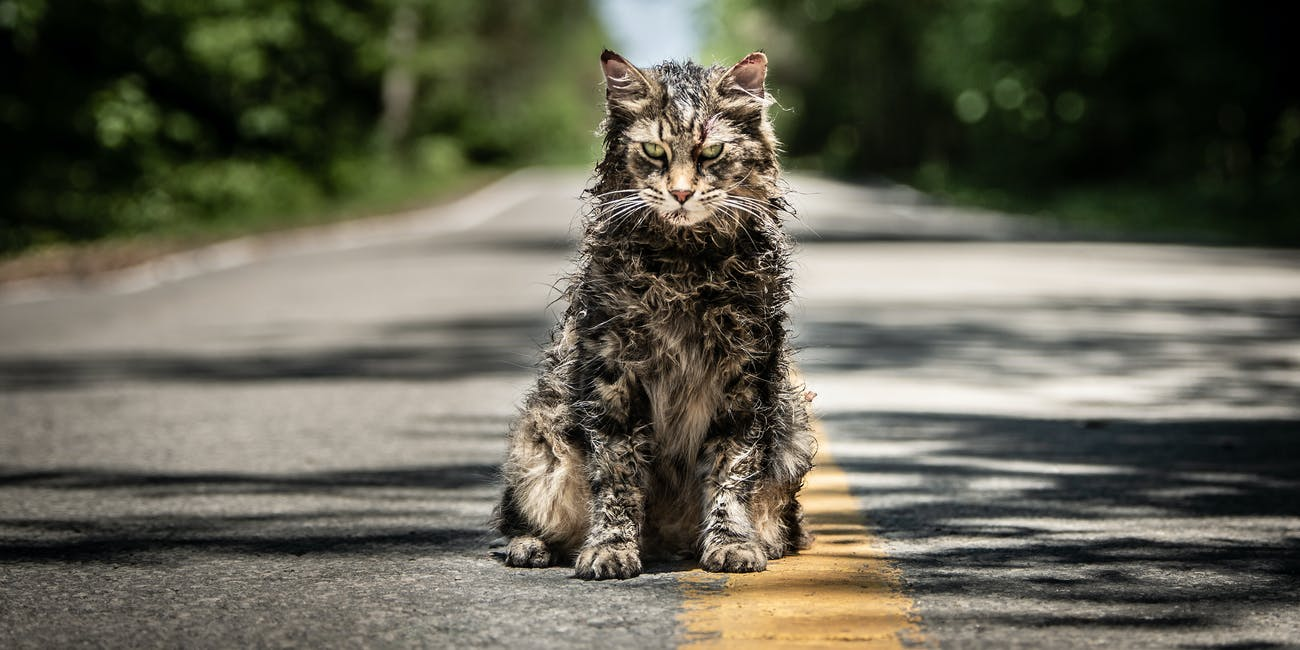 "The Cat Actor in ""Pet Sematary"""