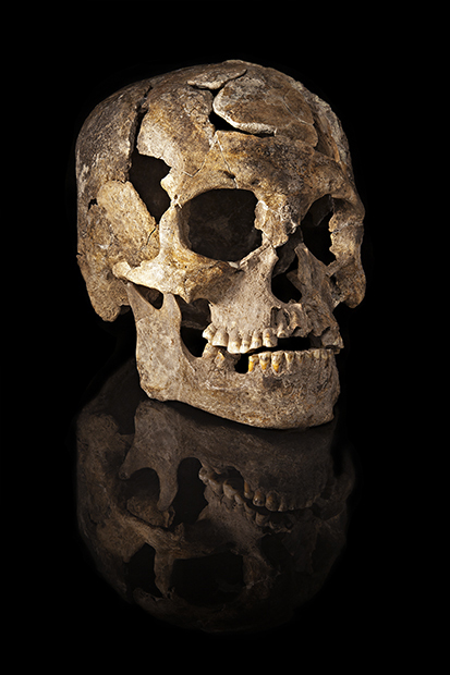 Paleoamerican skull from Burial 1, Lapa do Santo site, Brazil.