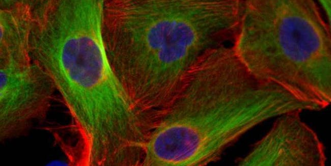 Tackling Tumors With Space Station Research (NASA, International Space Station, 02/28/14)