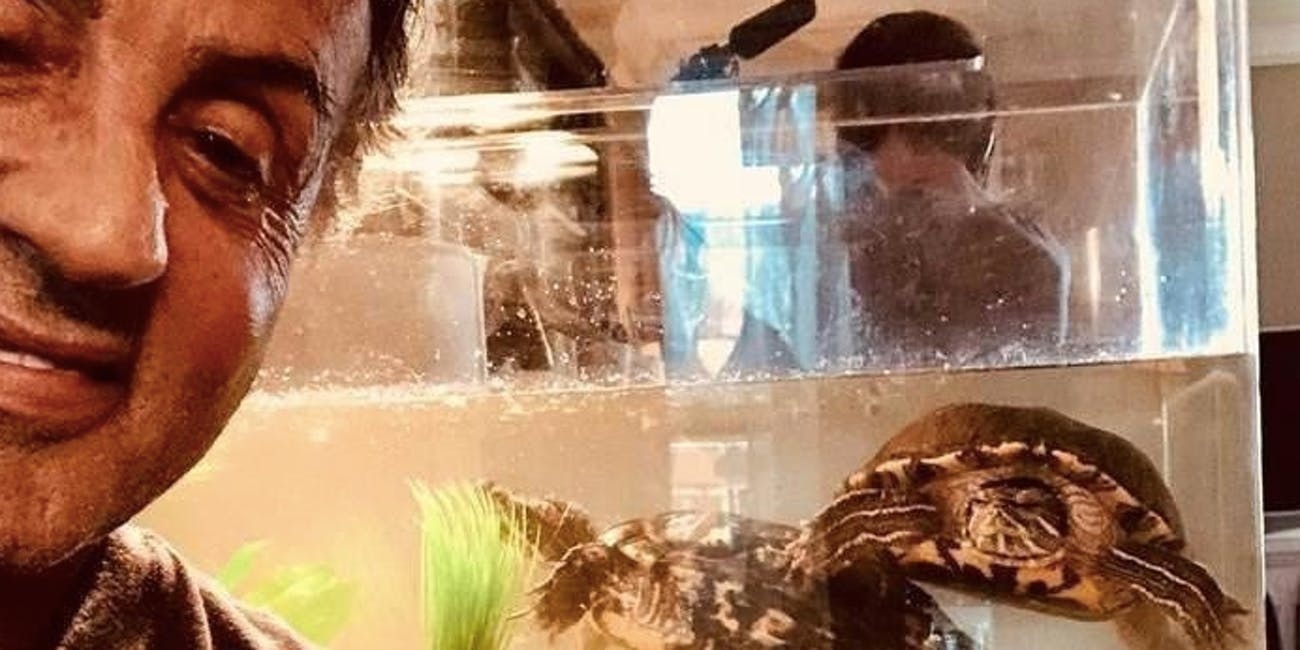sylvester stallone turtle rocky
