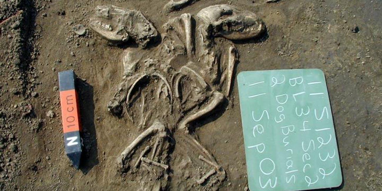 dog burial, bones