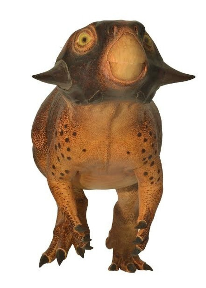 Psittacosaurus was brownish in color, and its scaly skin shows countershading, a common form of camouflage.