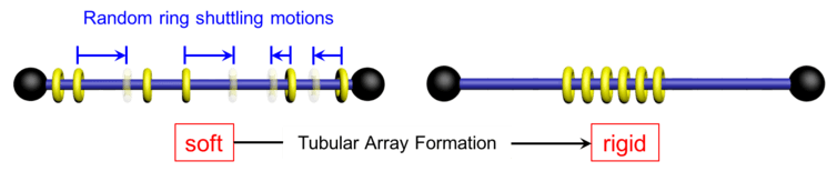 Cartoon presentation of a polyrotaxane. The rings are changed from the shuttling state, left, to the stationary state, right.