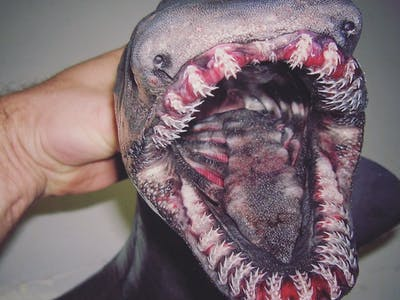 This Russian Fisherman's Feed Is Full of Terrifying Creatures of the Deep