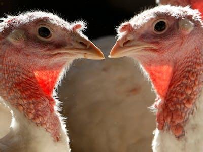 Birds Don't Have Teeth Because of Their Dinosaur Ancestors