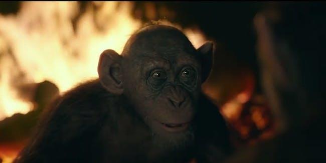 chimpanzee fuck woman movie