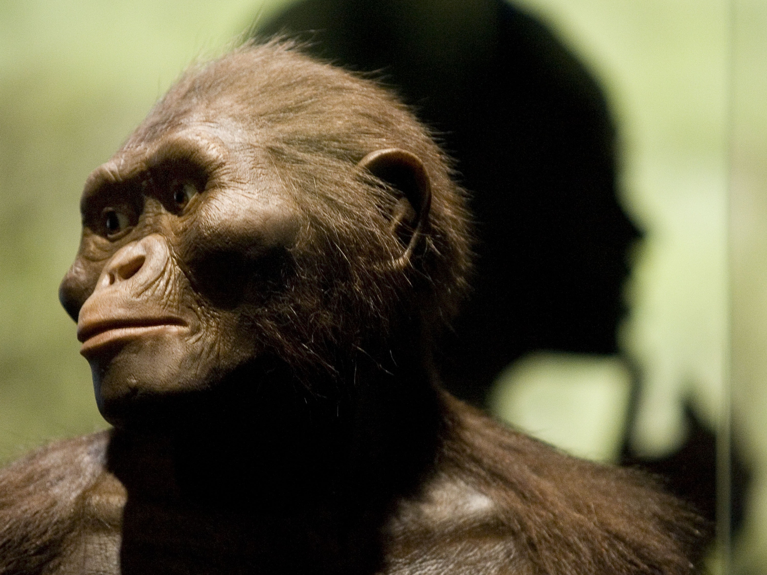 Lucy the Neanderthal Fell From a Tree — Here's Why It Matters