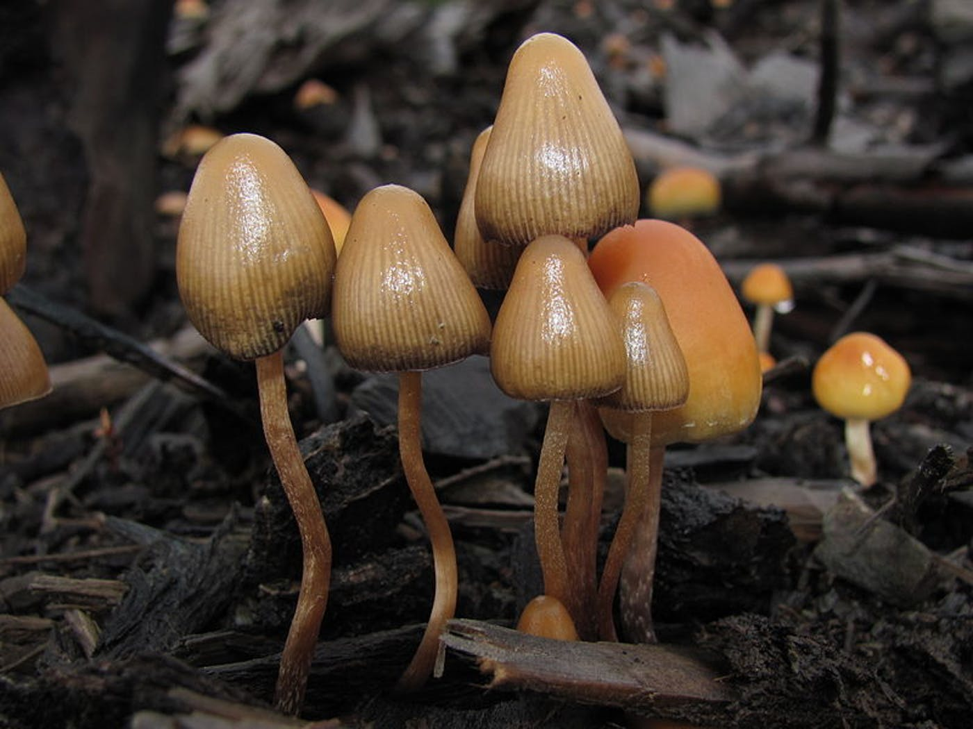Psychedelic Mushrooms Increase How Connected You Feel With Nature