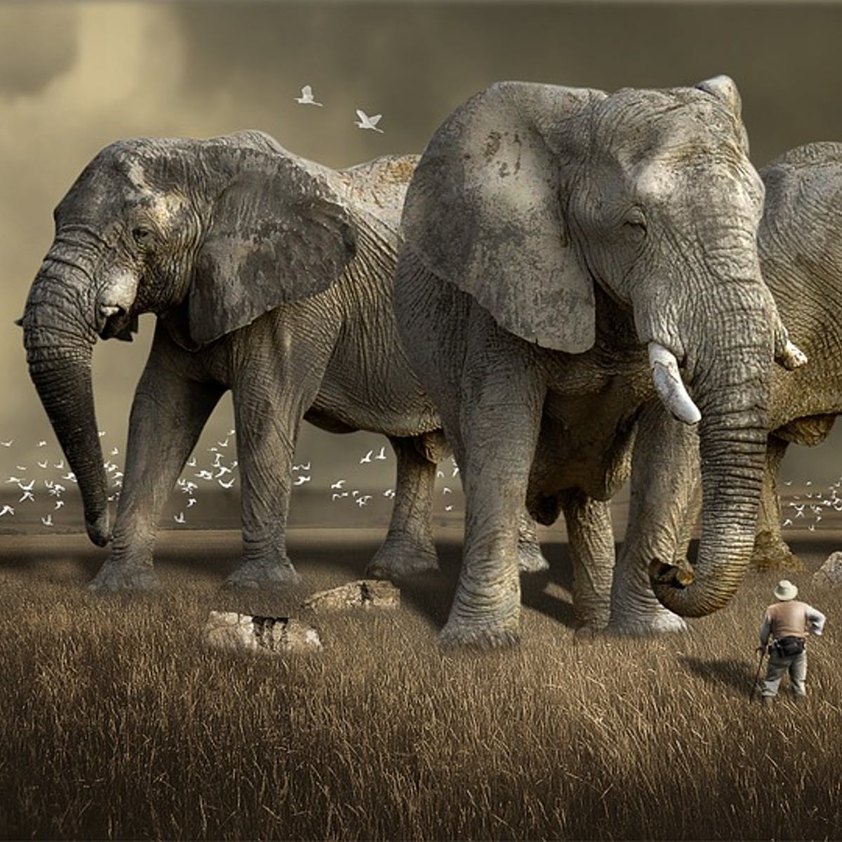 422175f0a6e3 World s Top 3 Illegal Ivory Cartels Exposed Thanks to DNA Testing ...