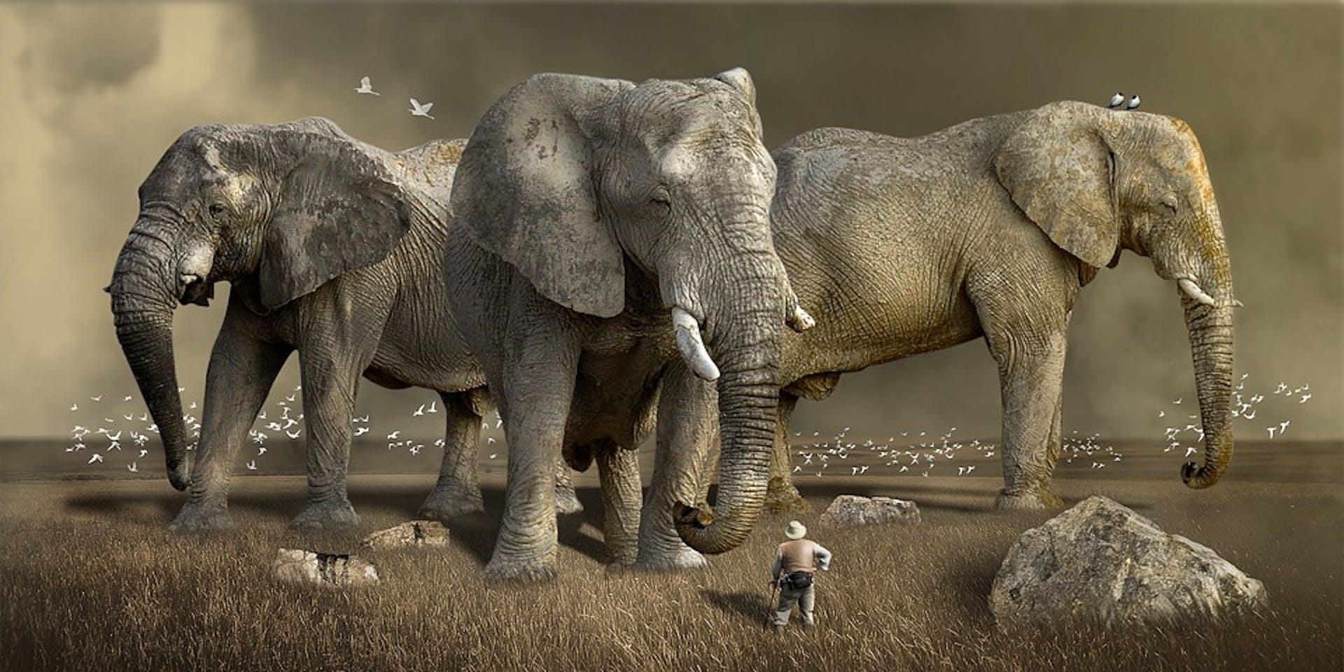 elephant ivory cartel dna evidence poachers