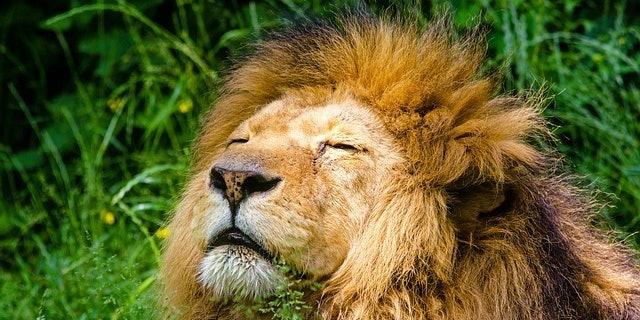 ALTERNATE FUTURES   The Plot Against Wild Animals