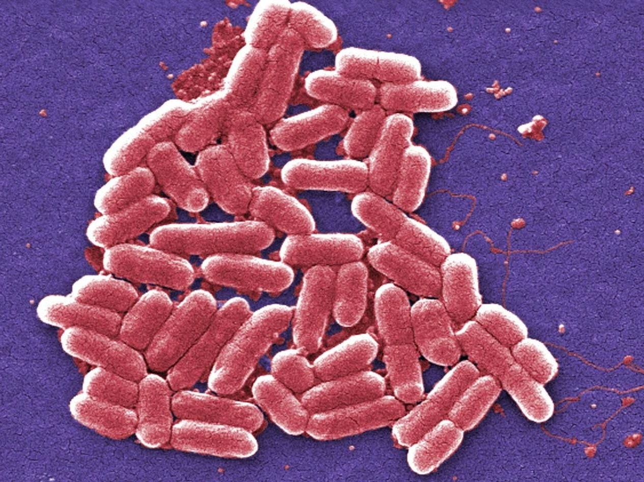 Thousands of Years of Poop Science Prepared Humans to Master Gut Flora Gardening