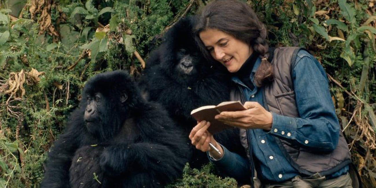 A new National Geographic miniseries focuses on the real story of Dian Fossey.