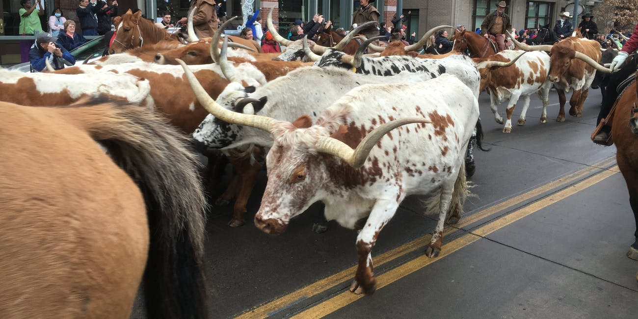 Denver's National Western Stock Show Is the Drunk, Better