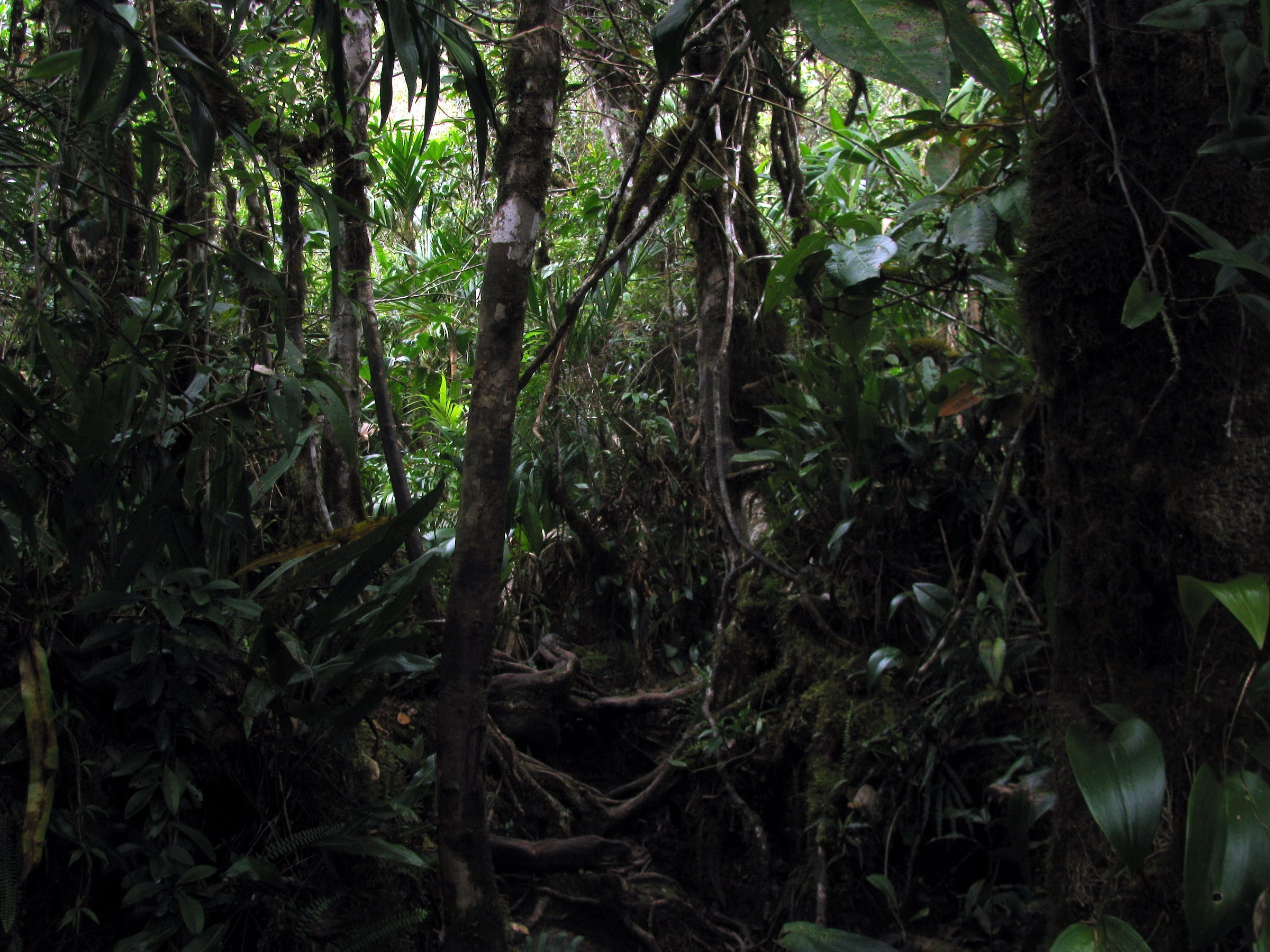 Jungle, near Brazil/Venezuela border