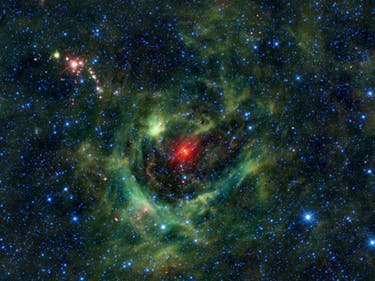 Lucky Young Stars Find a Home in the Shamrock Nebula
