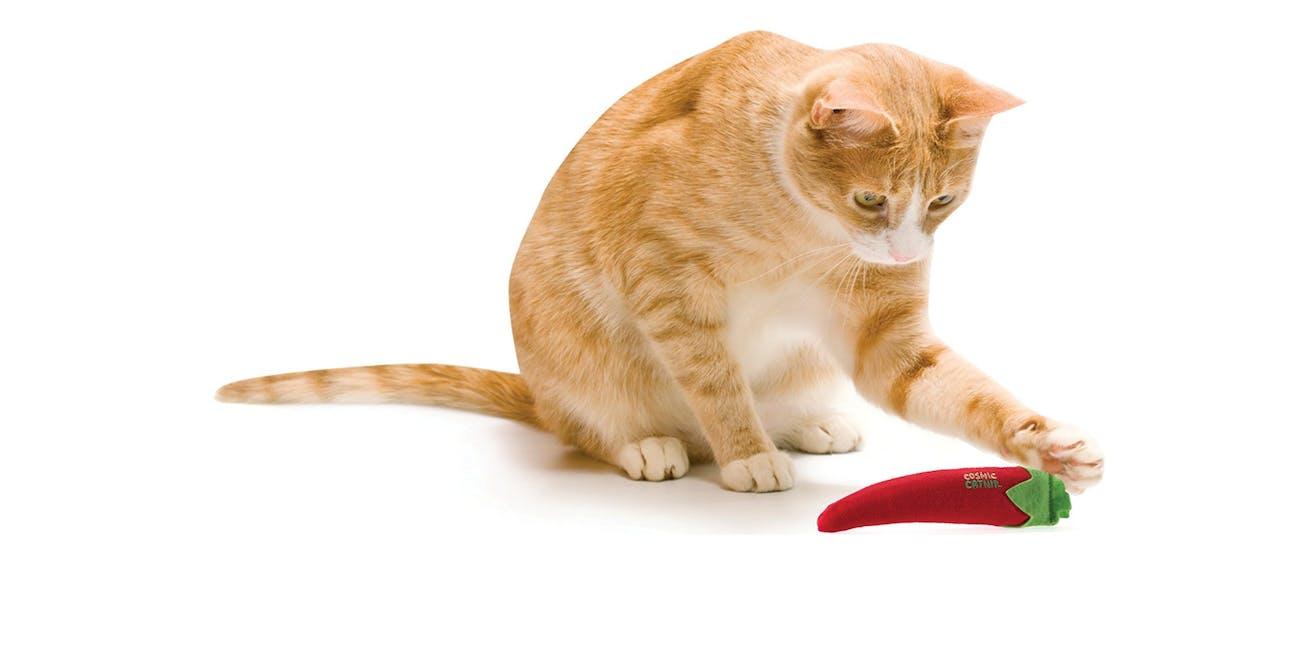 chili cat toy