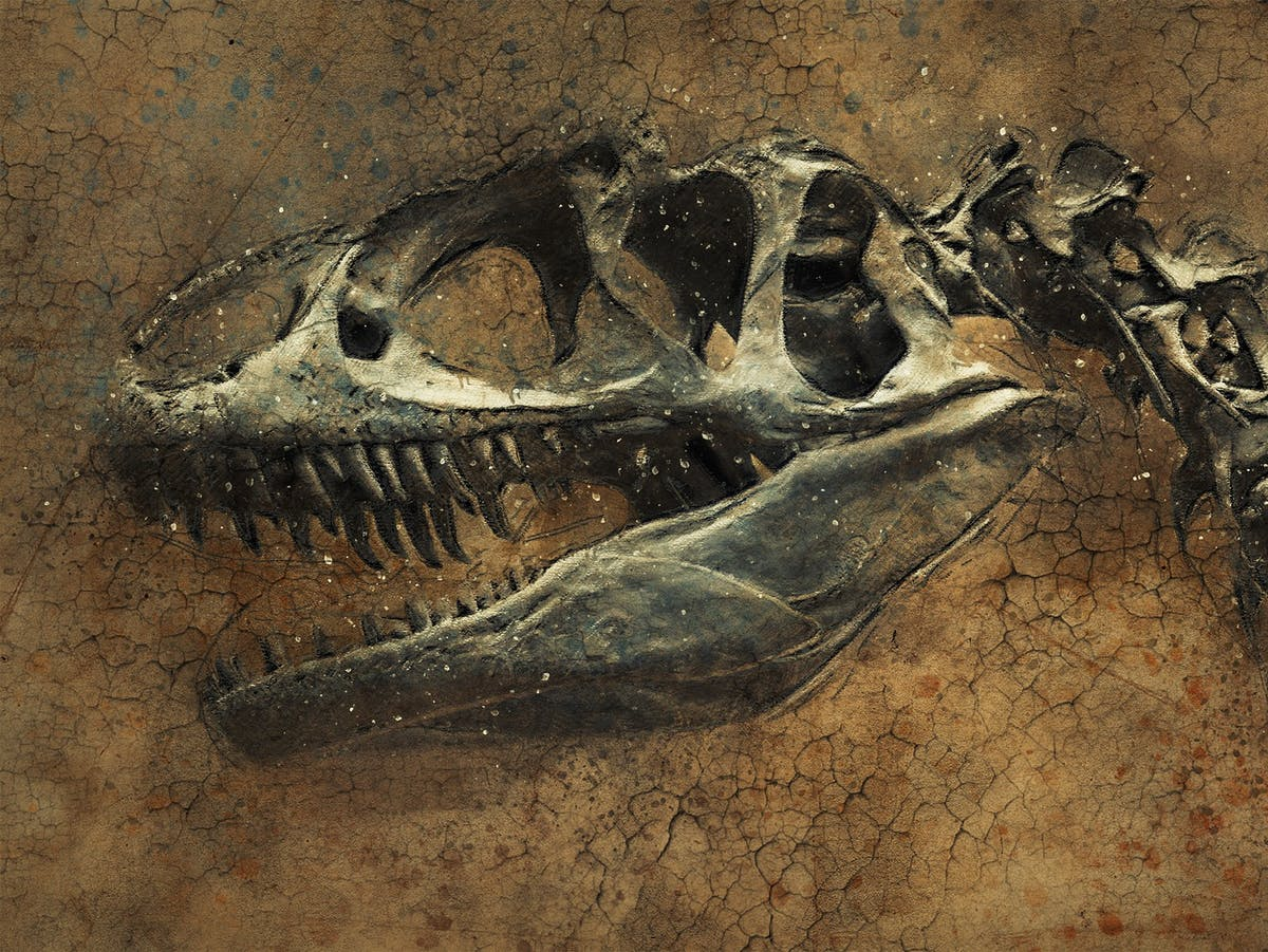 A Theory About Life After the Dinosaur-Killing Asteroid Has Been Upended