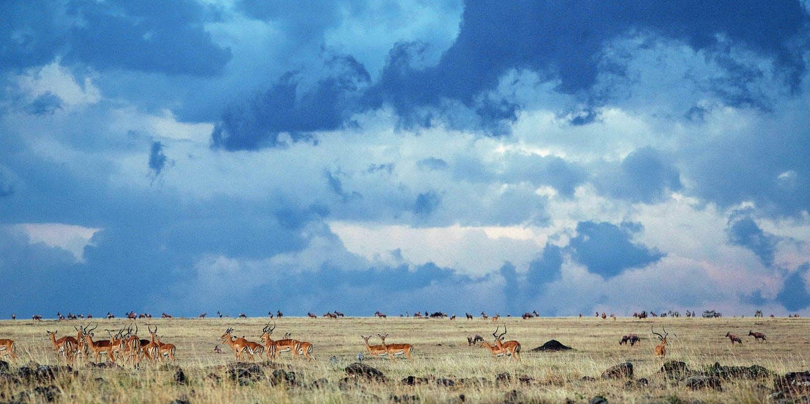 Go behind the scenes of Planet Earth II's 'Grasslands.'