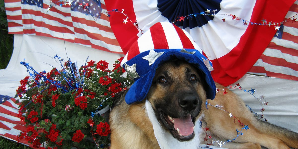 dog uncle sam hat beard flag american patriot grass flowers golden retriever