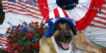 dog uncle sam hat beard flag american patriot grass flowers golden retriever