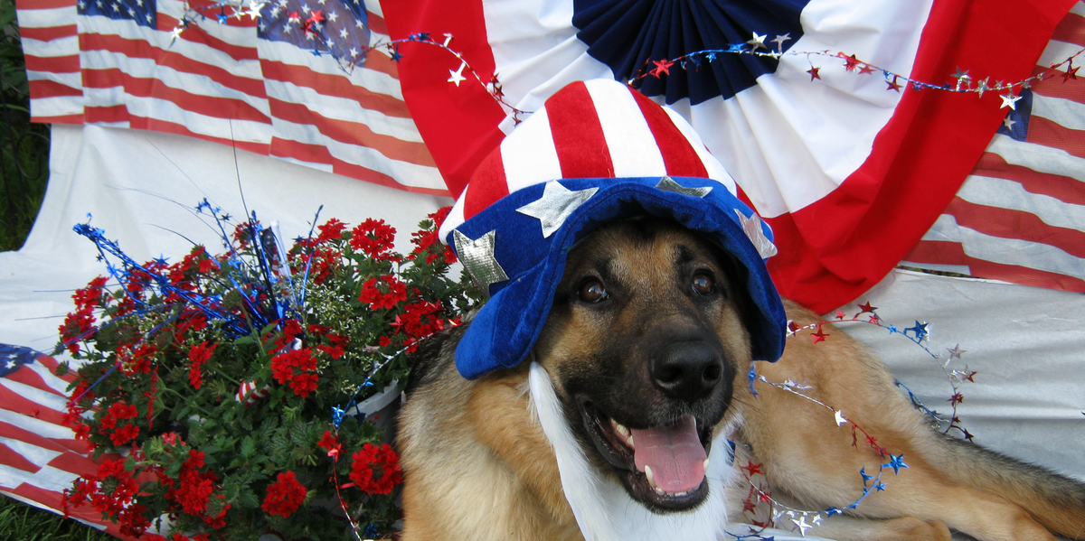 Why Dogs Are Afraid Of Fireworks Inverse