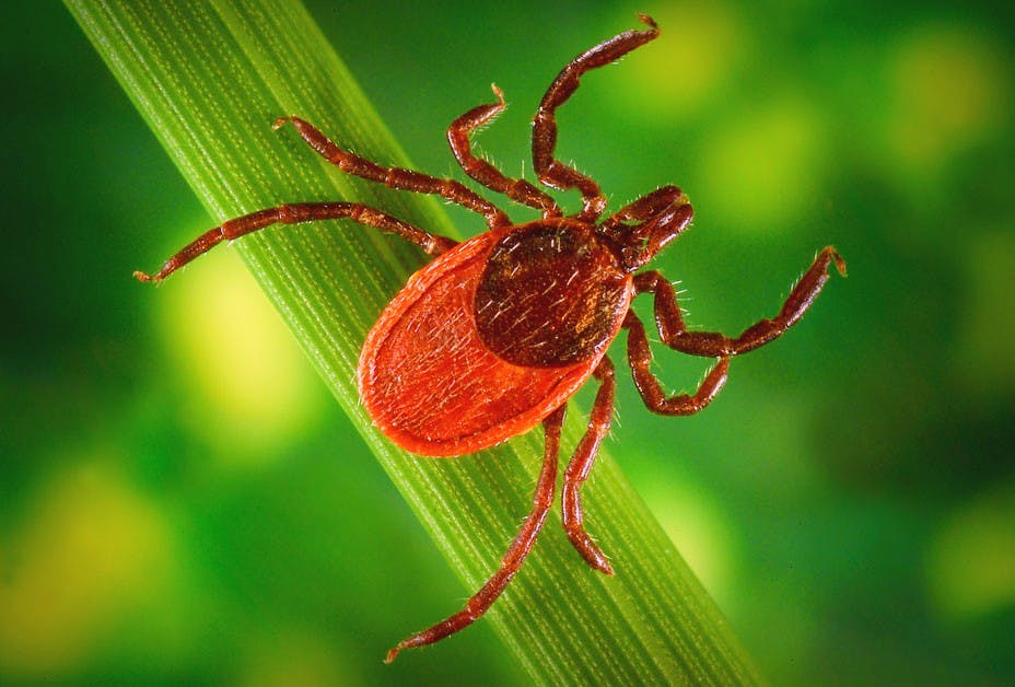 Maps Show How Dog Blood Samples Can Predict Lyme Disease Risks