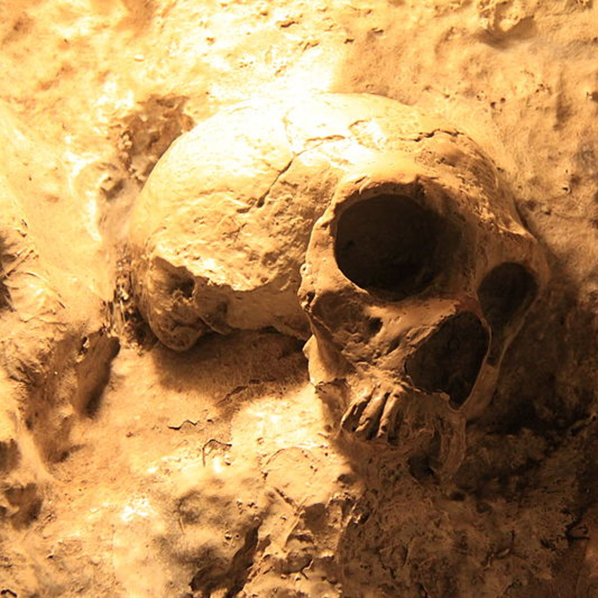 7 Discoveries About Ancient Human Evolution That Reshaped Our History