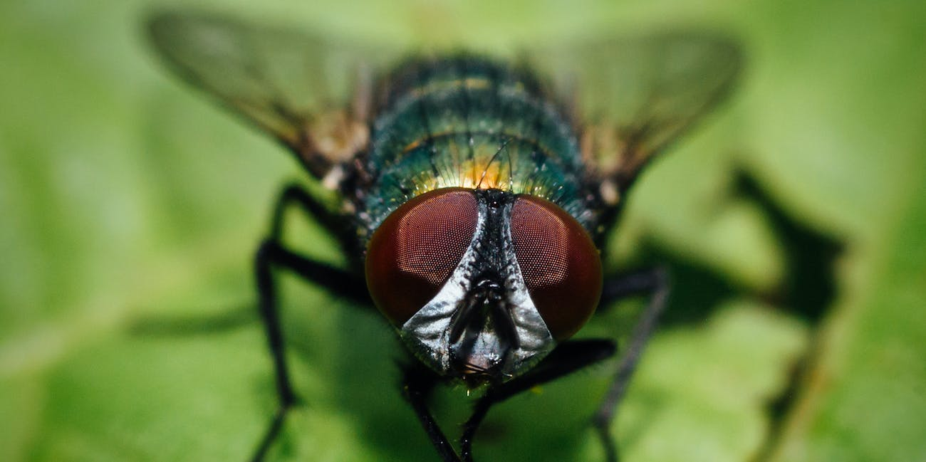 Scientists Can Now Read a Fly\'s Mind | Inverse