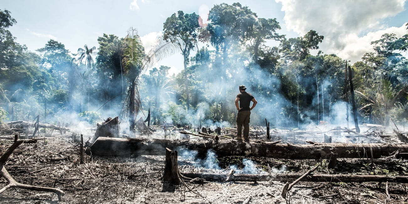 Experts Explain How You Can Help Protect the Amazon From Destruction