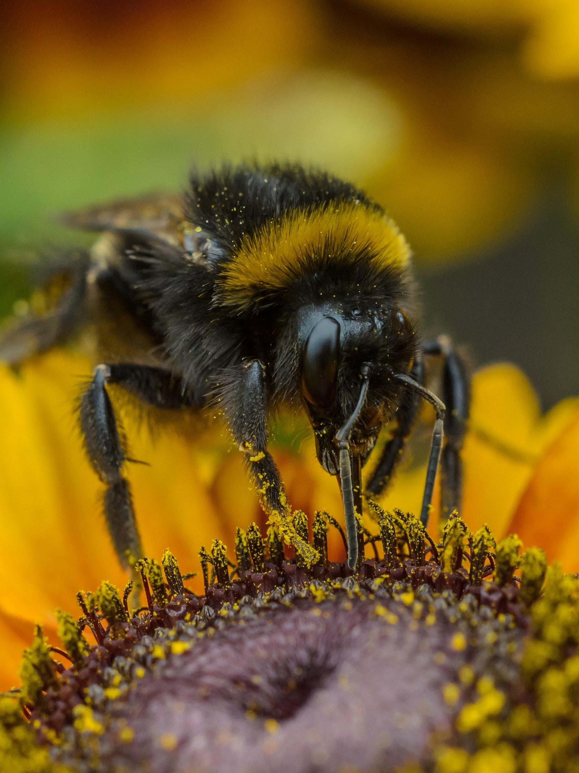 The $11 Billion California Almond Economy Relies on Honey Bees to Thrive