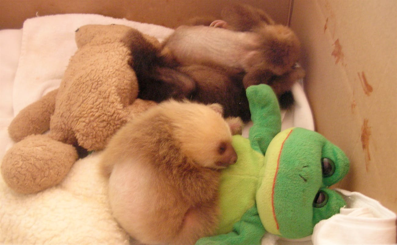 Baby Sloths with Animals