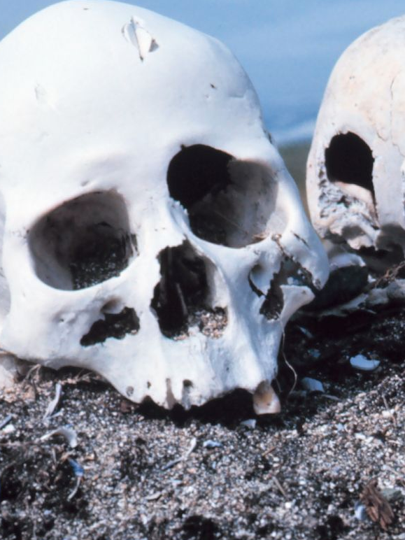 A forensic cemetery is opening in Amsterdam.