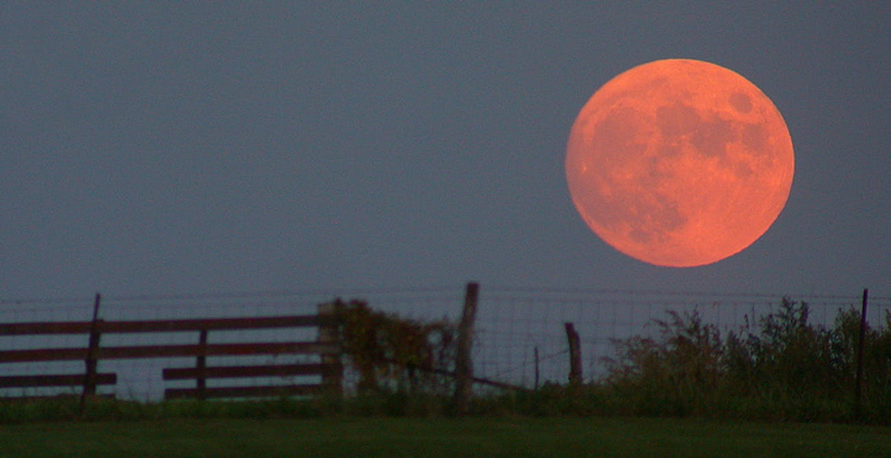 Harvest moon has a reddish color because of its place in the atmosphere.