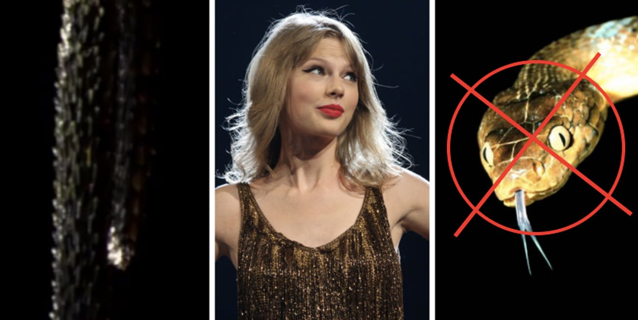 Is Taylor Swift a snake or not?