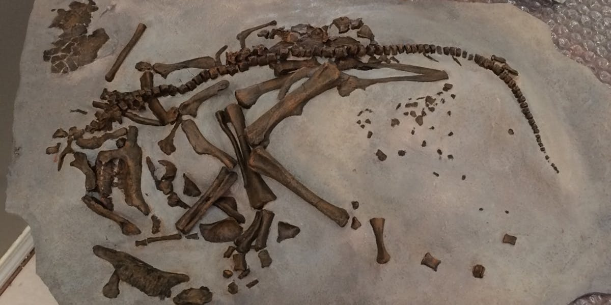 Given that these warm-blooded creatures required considerable resources to reach adult size, took more than a year to mature and had slow incubation times, they would have been at a distinct disadvantage compared to other animals that survived the extinction event.