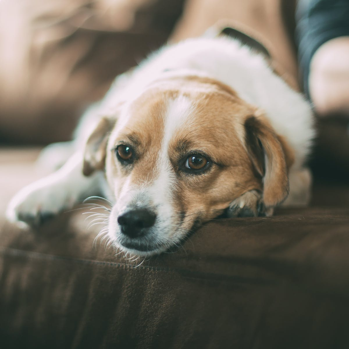 The Scientific Reason Why Your Dog Might Secretly Love to Watch TV