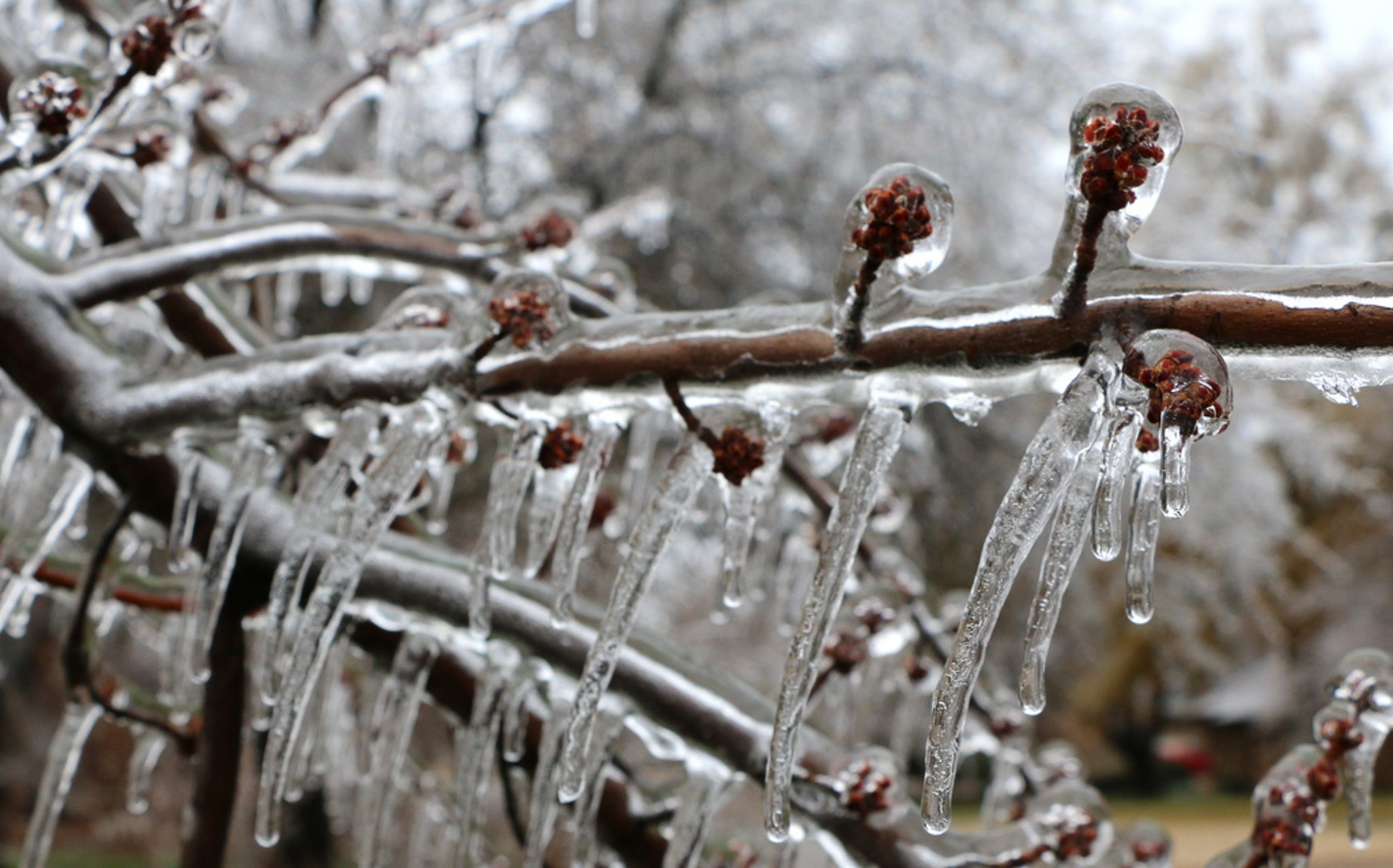 Freezing rain is beautiful and treacherous.